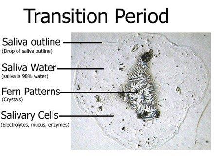 hvor ofte har man menstruation dating dk wiki